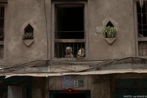 Window Dogs