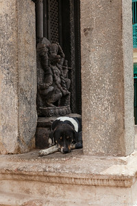Temple Dog 2