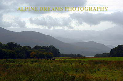 Cattle and the Kerry Mountains