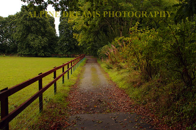 Country lane by Blarney Castle