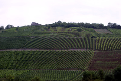 more vineyards - Franconia is white wine country