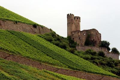 Ehrenfels Castle and Ehrenfelser grapes