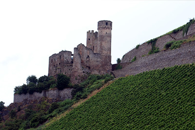 Ehrenfels Castle ruins - located on the steep eastern bank of the river amid extended vineyards. The grape variety Ehrenfelser is named after the castle.