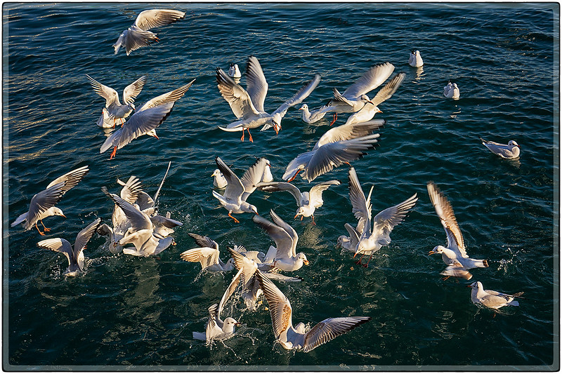 Feeding Frenzy at the Port of Barcelona, Spain