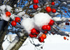 Snow and berries.