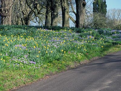 Spring flowers, Mells Manor, Somerset.