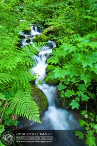 Stream Crossing Upper Eagle Creek Trail, Oregon