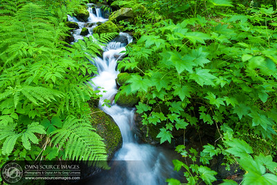 Stream Crossing Upper Eagle Creek Trail, Oregon