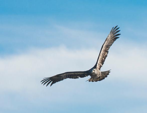 Eagles & Virginia Beach