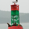 Eagle on bouy near Juneau-100