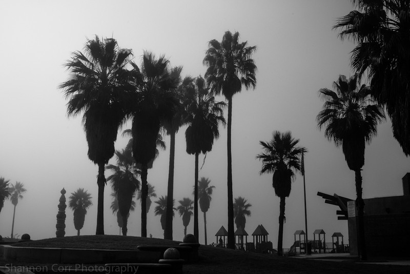 Venice Beach in the Morning