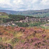 Purple Heather overlooking Haworth