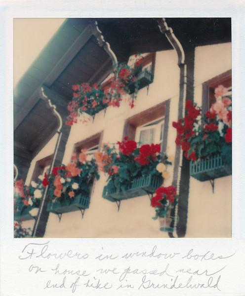 Beautiful window box flowers in Grindelwald