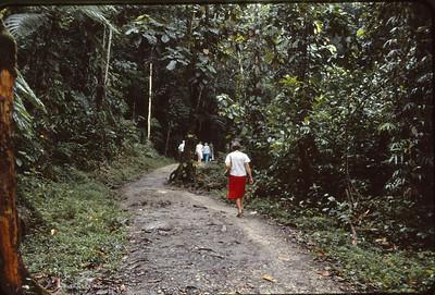 Rain forest visit