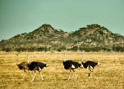 Ngorongoro plains