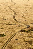 Tracks over Masai Mara