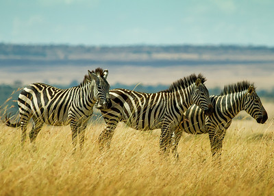 Masai Mara NP, Kenya