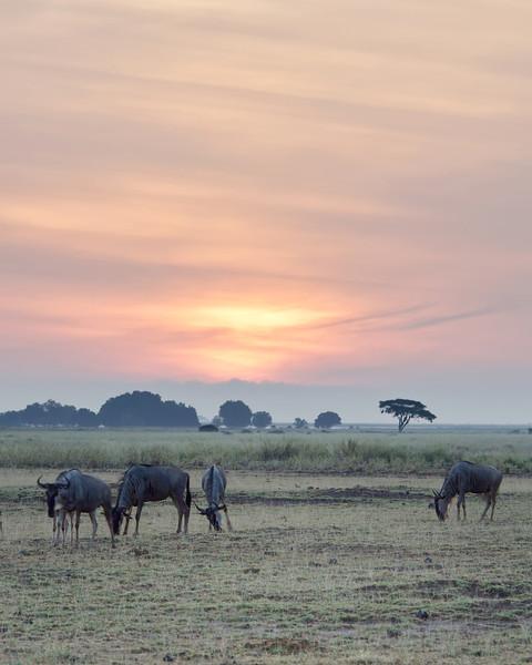 Sunrise in Amboseli NP, Kenya