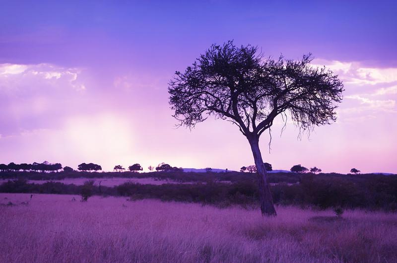 rain near dusk over Masai Mara