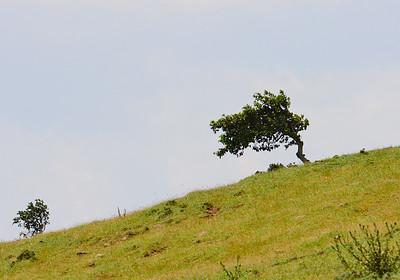 John's tree - Ngong Hills