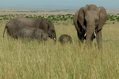 An elephant family with one very young elephant.