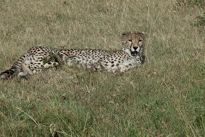 Cheetah.  Did we wake her?