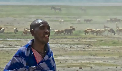 Masai man with the cattle grazing on the crater floor.