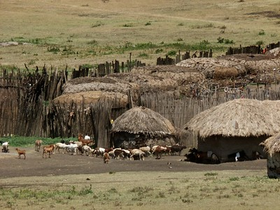 The Masai are permitted to live in the Conservation area and graze their cattle.  They are not a threat to the wildlife.