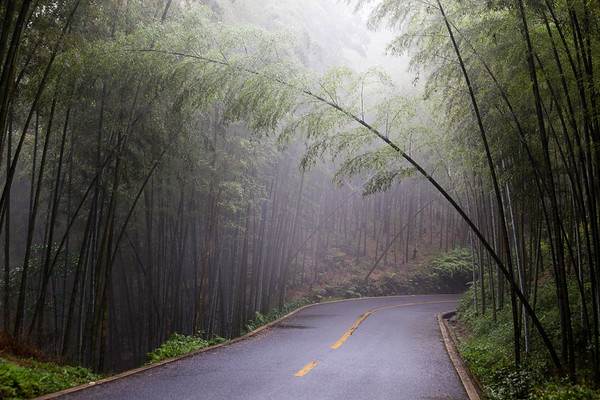 Walking along a road through the Bamboo Sea in Sichuan, China.