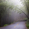 Walking along a road through the Bamboo Sea in Sichuan, China.