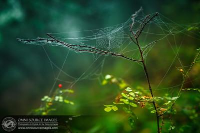 Tiny Web - Huckleberry Botanic Regional Preserve.