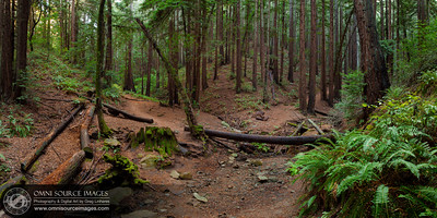 Redwood Regional Park - HD Panorama. (8,268 x 4134 pixels/300dpi). Digitally stitched from five vertical exposures, each individual frame was exposed for 13 seconds at f/11, ISO 50, 24mm. Sunday, September 22, 2013 at 5:20 PM.