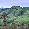 Sibley Volcanic Regional Preserve - Super-HD Panorama. (14,989 x 4996 pixels/300dpi)