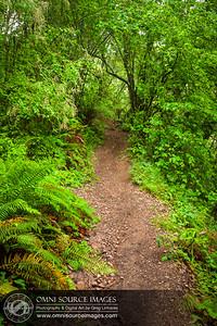Huckleberry Botanic Regional Preserve Hiking Trail - Oakland, CA