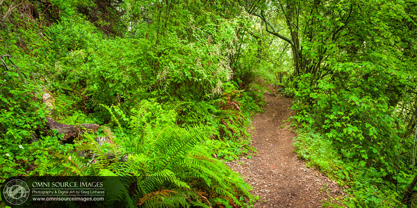 Huckleberry Botanic Regional Preserve Hiking Trail - Oakland, CA