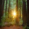 Redwood Ring - Joaquin Miller Park, Oakland, CA. Sunday, Dec 2, 2012. 20 sec at f/11, ISO 50, 24mm.