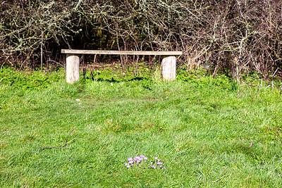Mrs Wood's bench