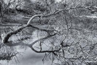 The ancient pond Friston