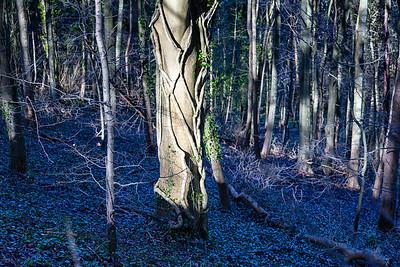 Friston wood