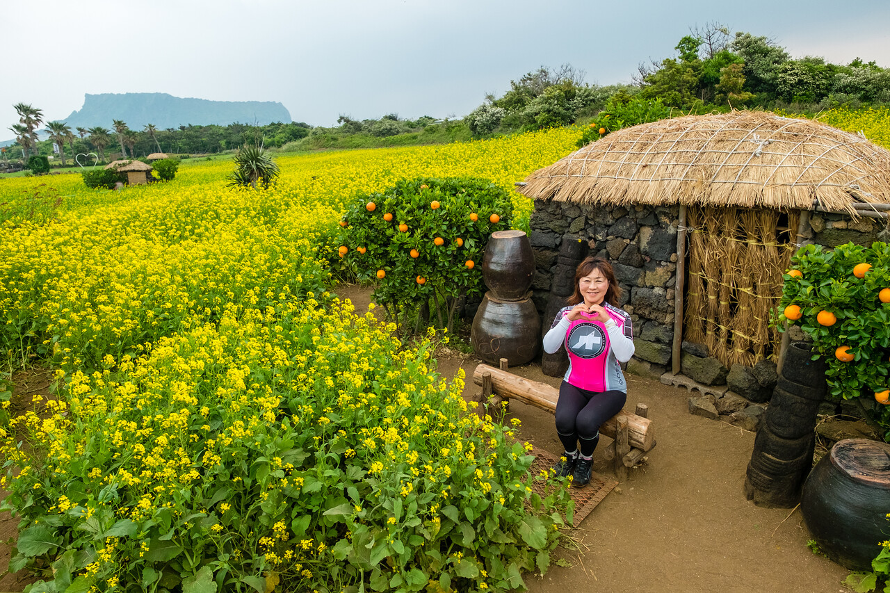Jeju Rapeseed Field