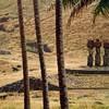 Anakena, where the first Polynesians arrived 13 centuries ago.