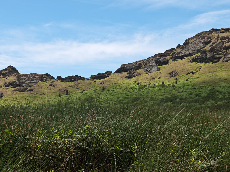 Moai in various states of completion inside the crater rim of Rano Raraku