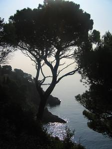 Trees along the coast