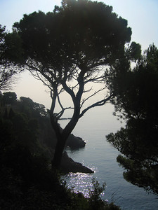 Trees along the coast