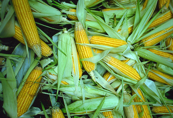 Corn at street market