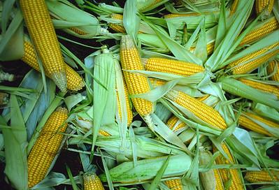 Corn at street market