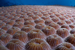 Abstract of hard coral. Eastern Fields, Papua New Guinea