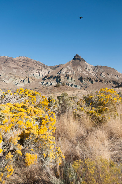 Sheep Rock, in one of three units of the John Day Fossil Beds National Monument.  If you go here, stop by Mitchell, OR for a really nice burger at the Little Pine Cafe.  Which you kinda have to do, because there is nothing else even remotely close to here.