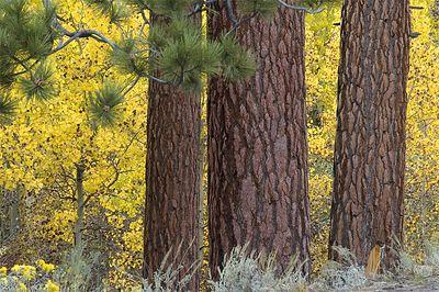 Eastern Sierra, Fall 2005