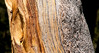 3 different layers on a pine bark